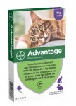 Advantage 80 Chat 4kg et + Bte de 4